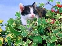 Котенок устроился в листьях