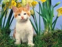 Котенок в нарциссах
