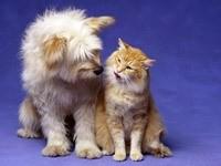 Разговор собаки и кошки