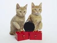 Два котенка с чемоданами