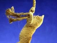 Кошка висит на канате