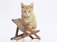Кот сидит на стуле