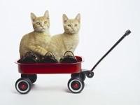 Два котенка в тележке