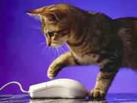 Кошка и компьютерная мышка