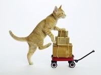 Котенок с багажом на тележке