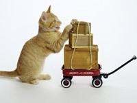 Котенок с тележкой