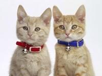 Два котенка с ошейниками