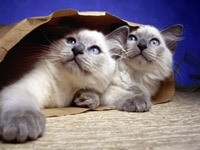 Двое котят в пакете