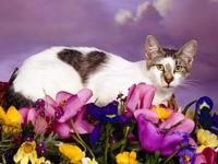 Кошка с сердечком в цветах