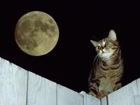 Кот на заборе, ночью