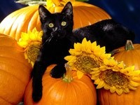 Черный кот лежит на тыквах и подсолнухах