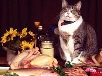 Кот на столе с продуктами