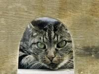 Кот выглядывает из домика