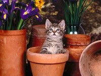 Котенок в горшке для цветов