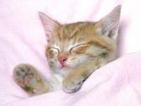 Сон рыжего котенка