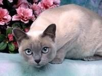 Кошка с цветами