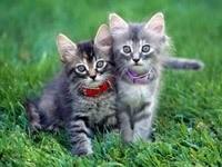 Котятки играются на траве