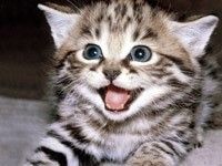 Мяукающий полосатый котенок