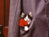 Котенок с цветком в кармане пиджака