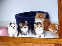 Пять  маленьких котят