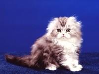 Маленький пушистый комочек - котёнок