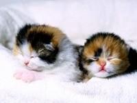 Двое маленьких котят