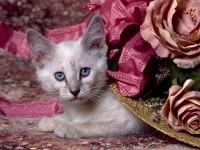 Кошка спряталась под шляпу