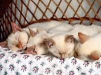 Сон четырех котят