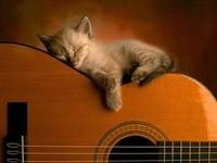 Котенок спит на гитаре