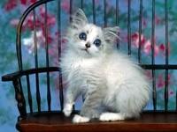 Белый котенок на стуле