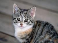 Внимательный котенок