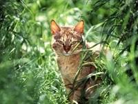 Кот спрятался в траве