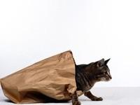 Кот вылезает из пакета