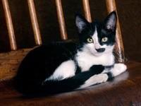 Кошка на деревянном  стуле