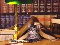 Котенок под книжкой в библиотеке