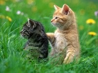 Два котенка в траве