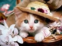 Кошка в шляпке и с цветами