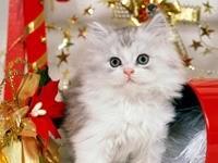 Белый котик с рождественским бантом