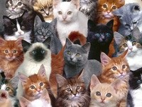 Много разных котов и кошек
