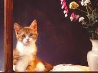 Котенок смотрит из окна