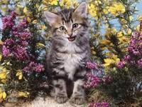 Серый котенок в цветах