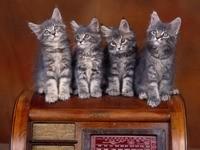 Четверо серых котят