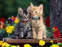 Два котенка в саду