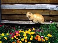 Кошка на лавочке возле клумбы