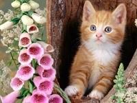 Котенок в дупле
