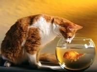 Кот и золотая рыбка в аквариуме