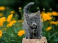 Серый котенок в саду цветов