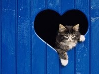 Кот в сердечке