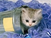 Котенок в ведерке