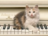 Котенок играет на пианино